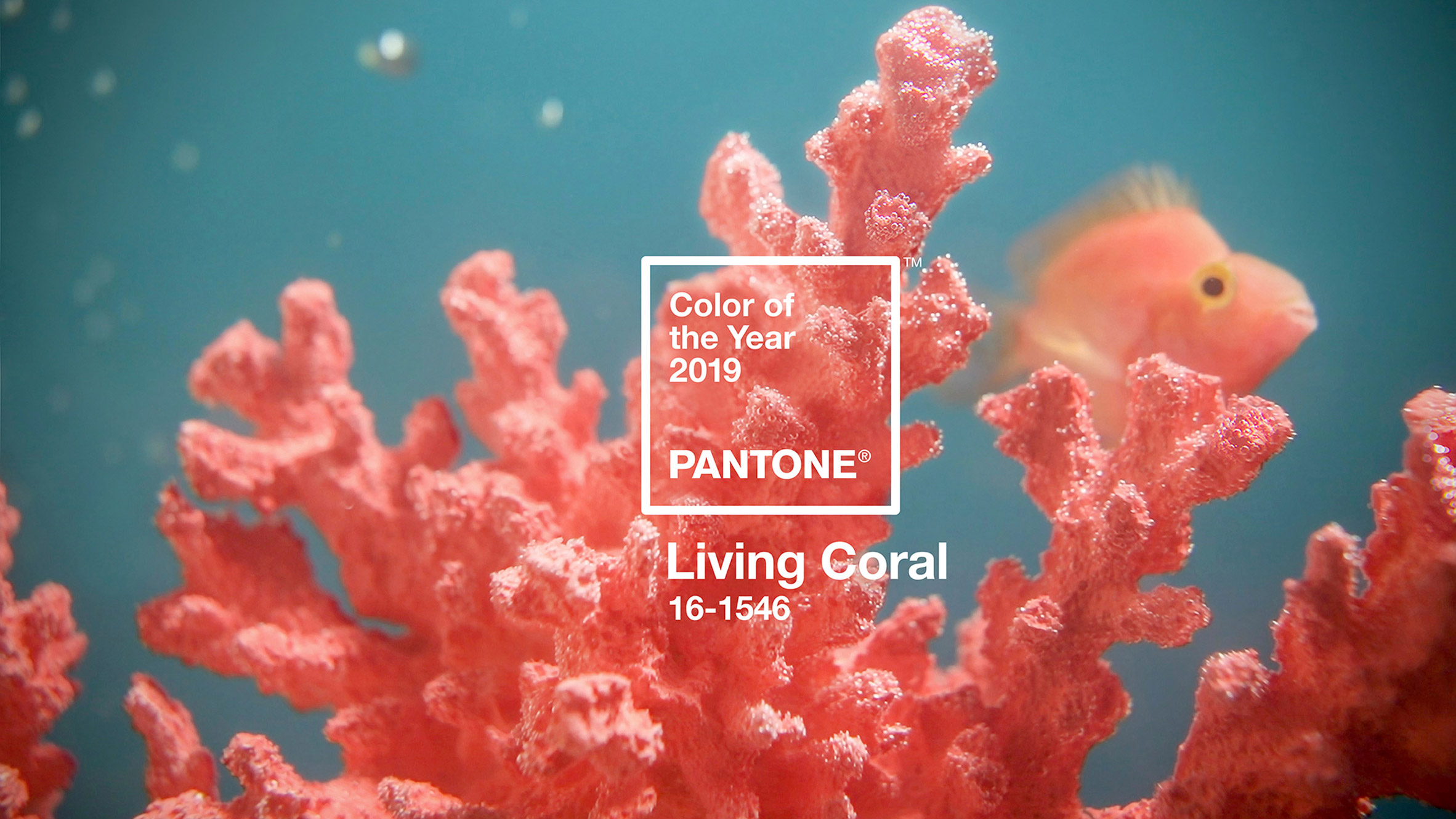 PANTONE Colour of 2019: Going Crazy For Coral