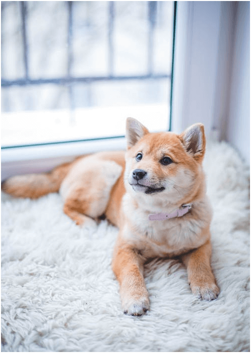 Pet-Friendly Rugs: The Ultimate Guide for Your Best Friend's Comfort
